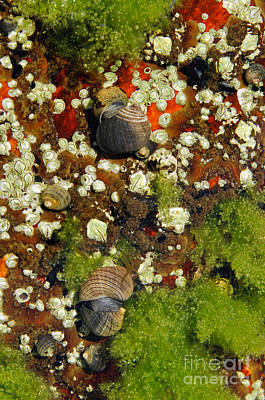 Photograph - Shoals Tide Pool by Sharon Seaward