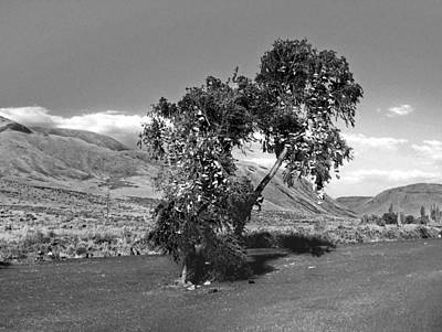 Photograph - Shoe Tree by Tarey Potter