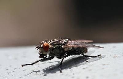 Photograph - Shoo Fly by Dan Sproul