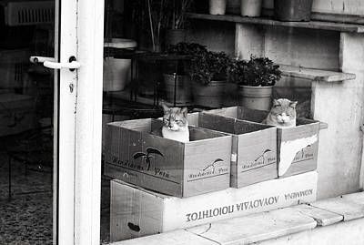Photograph - Shop Window Cats by Laura Melis