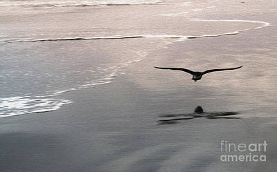 Shore Bird Print by Gregory Dyer