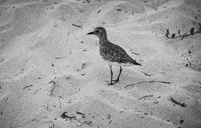 Art Print featuring the photograph Shore Bird by Phil Abrams