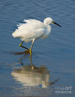 Photograph - Shore Bird Reflection by Nick Zelinsky