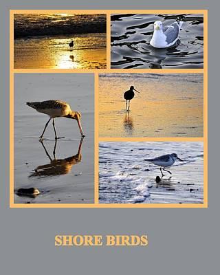 Photograph - Shore Birds by AJ  Schibig