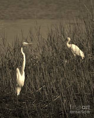 Photograph - Shore Birds In Sepia by Bob Sample