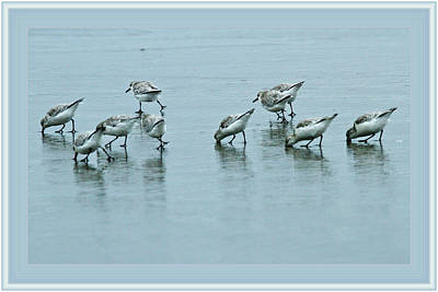 Photograph - Shore Birds by Marie Jamieson