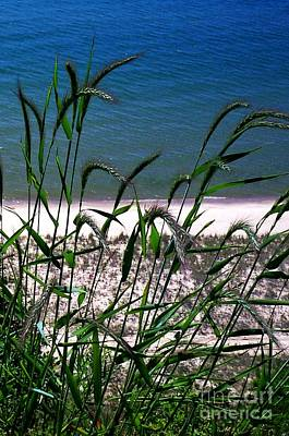 Photograph - Shore Grass View by Desiree Paquette