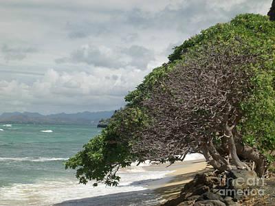 Marsh Photograph - Shore-hugging Hawaiian Tree by Deborah Smolinske