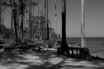 Photograph - Shore Pines by Debra Forand