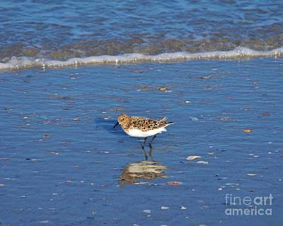 Photograph - Shorebird Reflection by Bob Sample