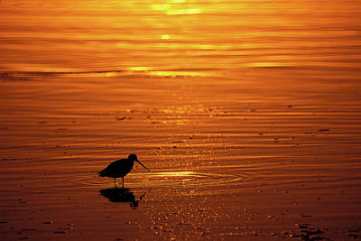Missions San Diego Photograph - Shorebird Sunset Mission Bay Park San by Animal Images