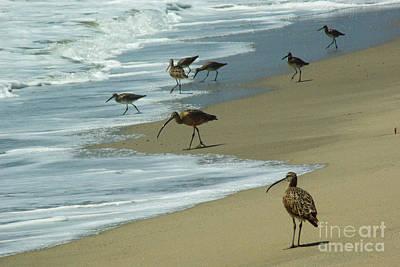 Shorebirds 1.4168 Art Print by Stephen Parker