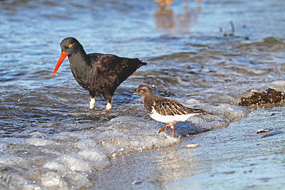 Photograph - Shorebirds And Breaking Wave by Peggy Collins
