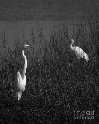 Photograph - Shore Birds In Black And White by Bob Sample