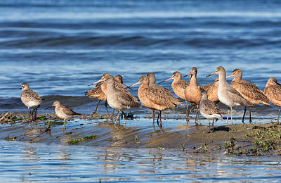Kathleen Photograph - Shorebirds On Bodega Bay by Kathleen Bishop