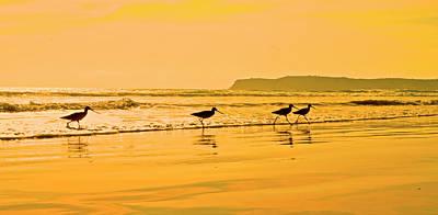 Shorebird Photograph - Shorebirds Race The Evening Tide by Richard Wright