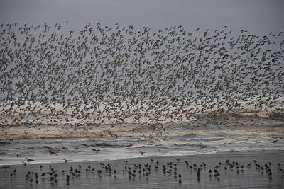 Photograph - Shorebirds Take Flight by Michael Merry
