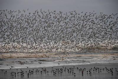 Photograph - Shorebirds Take Flight by Michael Merry
