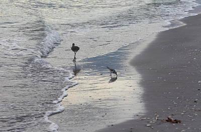 Photograph - Shoreline Birds by Katherine White