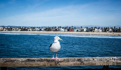 Photograph - Shoreline Real Estate Agent by Julie Clements