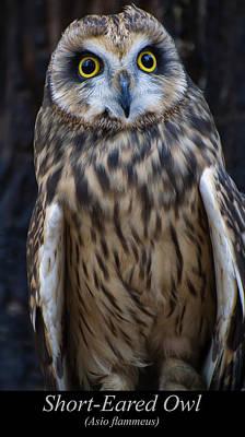 Digital Art - Short Eared Owl by Chris Flees