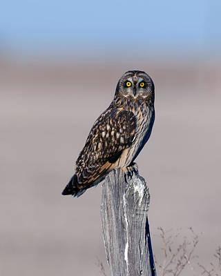 Owl Photograph - Short Eared Owl by Gary Langley