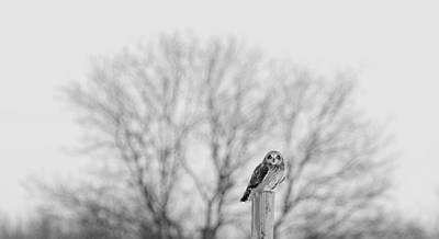 Short-eared Owl In Black And White Art Print