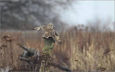Art Print featuring the photograph Short Eared Owl In Habitat by Daniel Behm