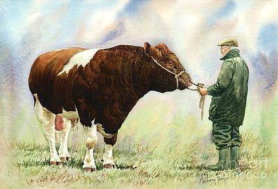 Shorthorn Bull Art Print by Anthony Forster