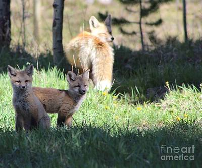 Photograph - Foxy Ladys Family by Fiona Kennard