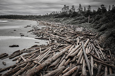 Photograph - Shoved Ashore Driftwood  by Roxy Hurtubise