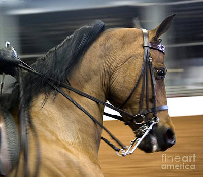 Photograph - Show Horse by Tom Brickhouse