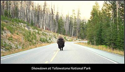 Photograph - Showdown At Yellowstone by Kathy Sampson