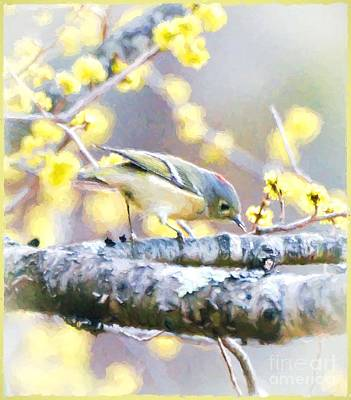 Ruby-crowned Kinglet Birds Photograph - Showing His Ruby Crown by Kerri Farley