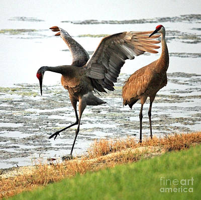 Florida Wildlife Photograph - Showoff by Carol Groenen