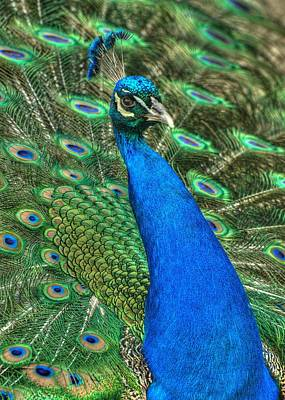 Photograph - Showoff by Jeff Cook