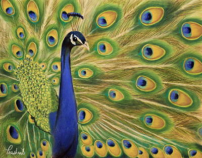 Showoff - Peacock Painting Art Print by Prashant Shah