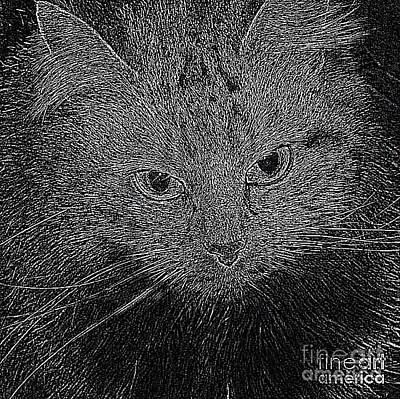 Photograph - Shpooleete. Digital Cat Portrait In Black And White. by Ausra Huntington nee Paulauskaite