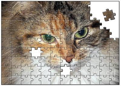 Photograph - Shpooleete. The Kitty Puzzle by Ausra Huntington nee Paulauskaite