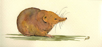 Rodent Wall Art - Painting - Shrew by Juan  Bosco