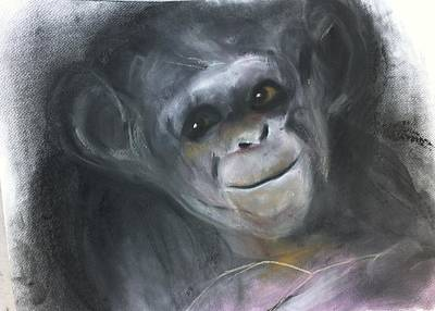 Chimpanzee Mixed Media - Shrewd by Macfarlane