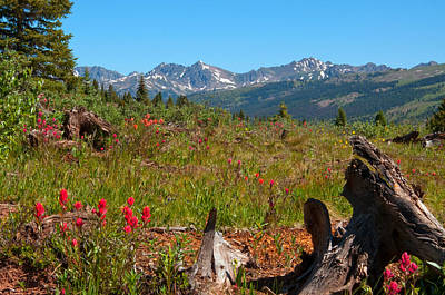 Photograph - Shrine Pass Speckled With Red  by Eric Rundle