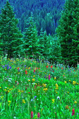 Shrine Pass Wildflowers Art Print by Jeremy Rhoades