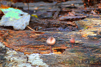 Photograph - Shrooms by Marilyn Holkham