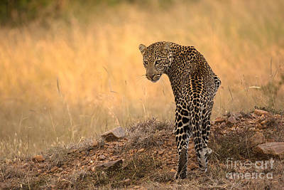 Over The Shoulder Photograph - Shy And Retiring by Ashley Vincent