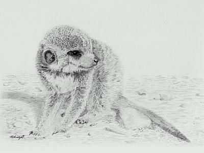 Meerkat Drawing - Shy Baby by Wendy Brunell