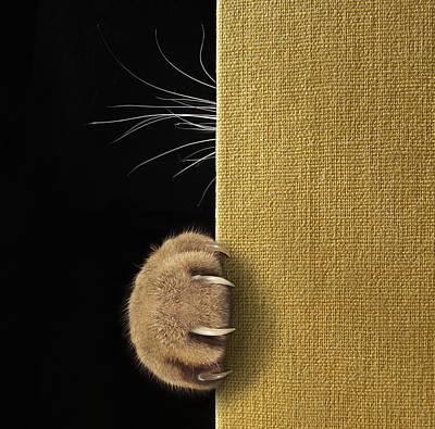 Hide Wall Art - Photograph - Shy Cat ... by Iryna Kuznetsova (iridi)