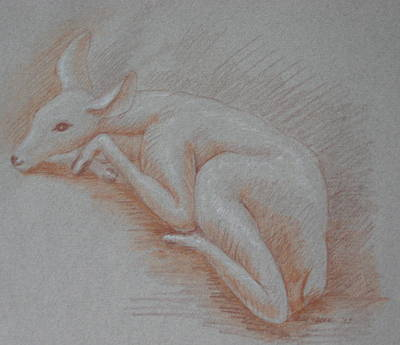 Drawing - Shy Fawn by Deborah Dendler