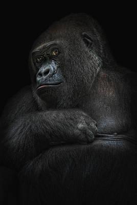Gorilla Photograph - Shy Gorilla Girl by Joachim G Pinkawa