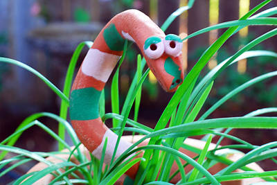 Photograph - Shy Guy Hiding In Chives by Connie Fox